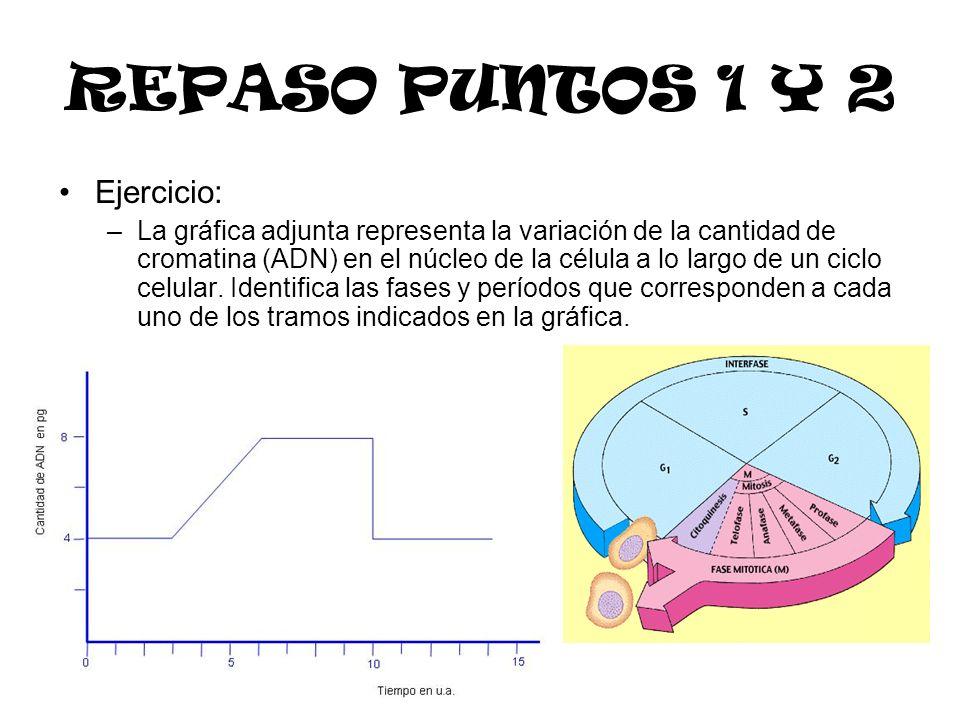 REPASO PUNTOS 1 Y 2 Ejercicio: –La gráfica adjunta representa la variación de la cantidad de cromatina (ADN) en el núcleo de la célula a lo largo de u