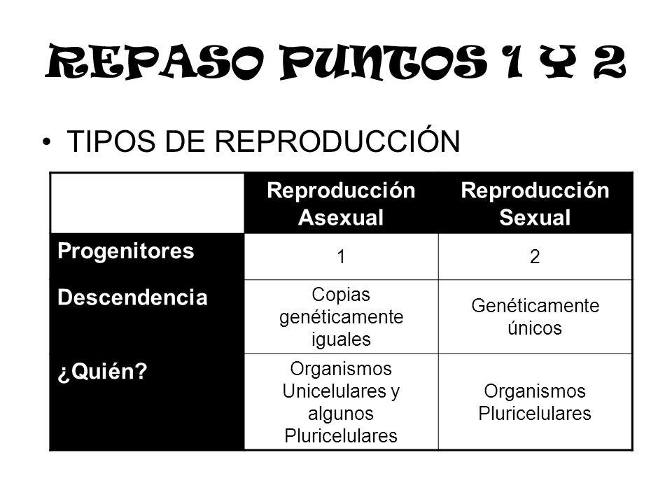 TIPOS DE REPRODUCCIÓN Reproducción Asexual Reproducción Sexual Progenitores 12 Descendencia Copias genéticamente iguales Genéticamente únicos ¿Quién?