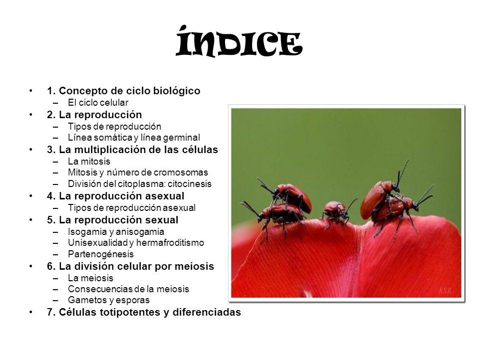 ACTIVIDADES TEMA 4 http://www.educa.madrid.org/web/cc.nsdel asabiduria.madrid/ejercicios1b.htm http://www.educa.madrid.org/web/cc.nsdel asabiduria.madrid/ejercicios1b.htm Tema mitosis meiosis http://www.iespando.com/web/departamen tos/biogeo/web/departamento/2BCH/B4_I NFORMACION/T408_MEIOSIS/EJERCICi OS.htmhttp://www.iespando.com/web/departamen tos/biogeo/web/departamento/2BCH/B4_I NFORMACION/T408_MEIOSIS/EJERCICi OS.htm