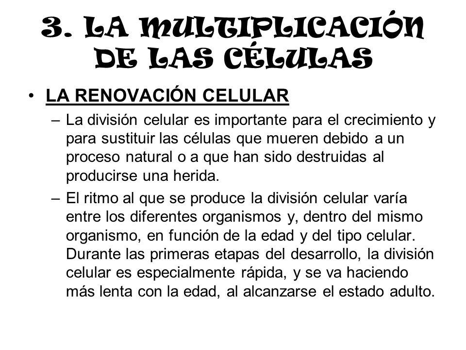 3. LA MULTIPLICACIÓN DE LAS CÉLULAS LA RENOVACIÓN CELULAR –La división celular es importante para el crecimiento y para sustituir las células que muer