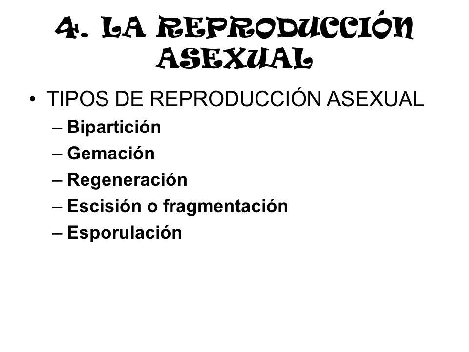 4. LA REPRODUCCIÓN ASEXUAL TIPOS DE REPRODUCCIÓN ASEXUAL –Bipartición –Gemación –Regeneración –Escisión o fragmentación –Esporulación