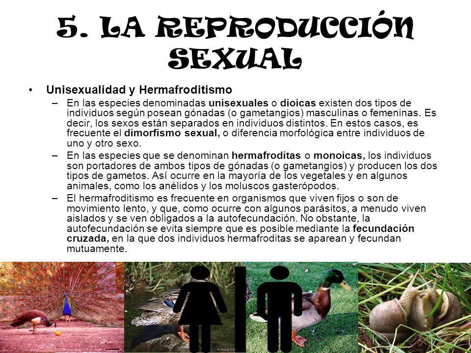 5. LA REPRODUCCIÓN SEXUAL Unisexualidad y Hermafroditismo –En las especies denominadas unisexuales o dioicas existen dos tipos de individuos según pos