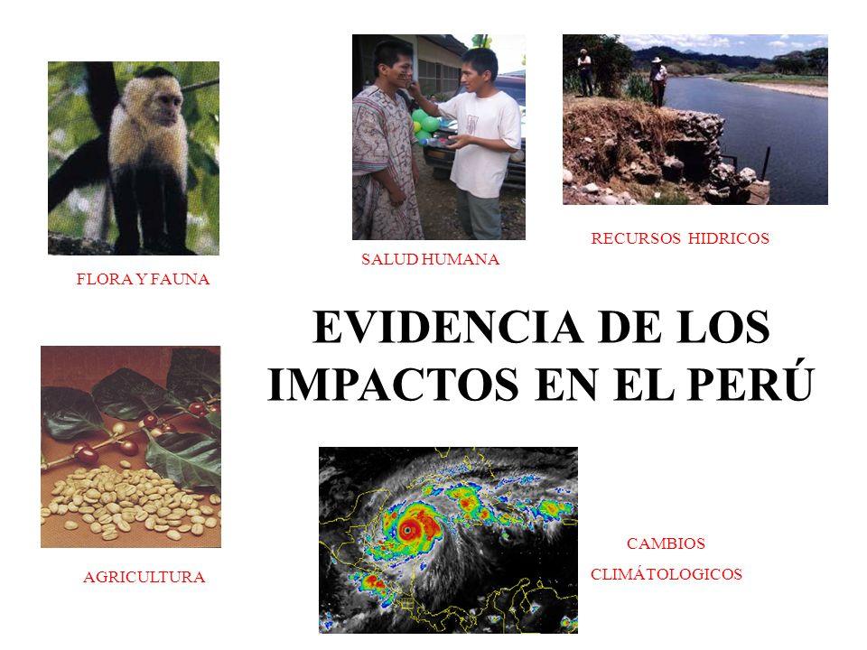 SALUD HUMANA RECURSOS HIDRICOS CAMBIOS CLIMÁTOLOGICOS EVIDENCIA DE LOS IMPACTOS EN EL PERÚ AGRICULTURA FLORA Y FAUNA