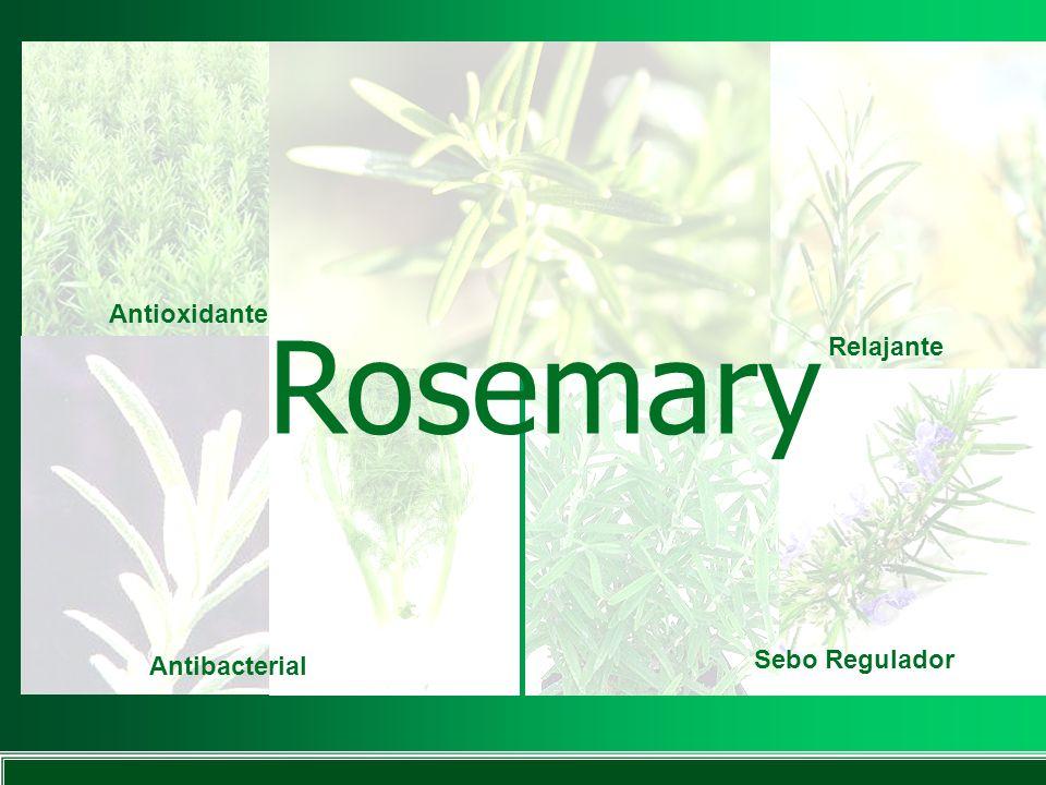 Rosemary Antioxidante Antibacterial Relajante Sebo Regulador