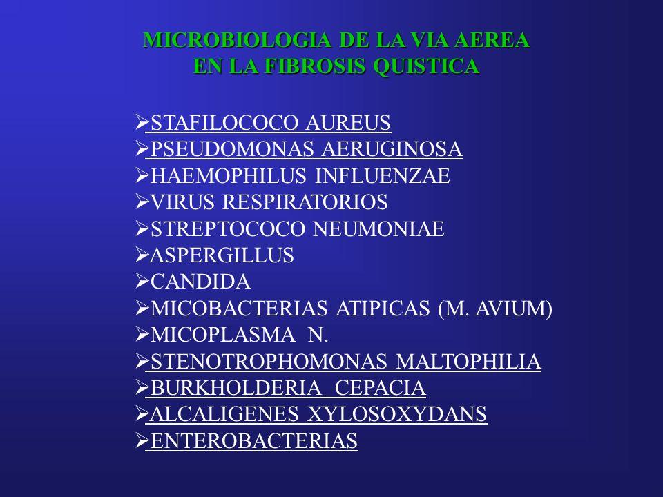 MICROBIOLOGIA DE LA VIA AEREA EN LA FIBROSIS QUISTICA STAFILOCOCO AUREUS PSEUDOMONAS AERUGINOSA HAEMOPHILUS INFLUENZAE VIRUS RESPIRATORIOS STREPTOCOCO