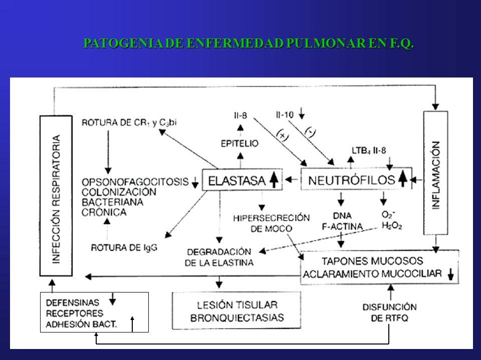 PATOGENIA DE ENFERMEDAD PULMONAR EN F.Q.