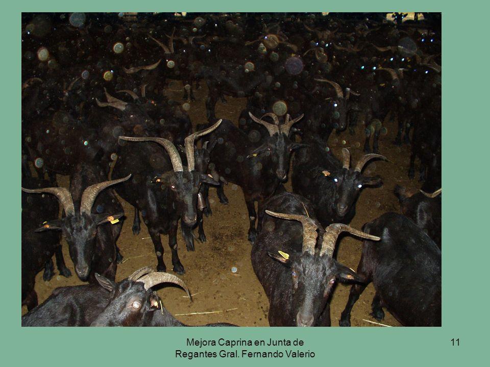 Mejora Caprina en Junta de Regantes Gral. Fernando Valerio 11