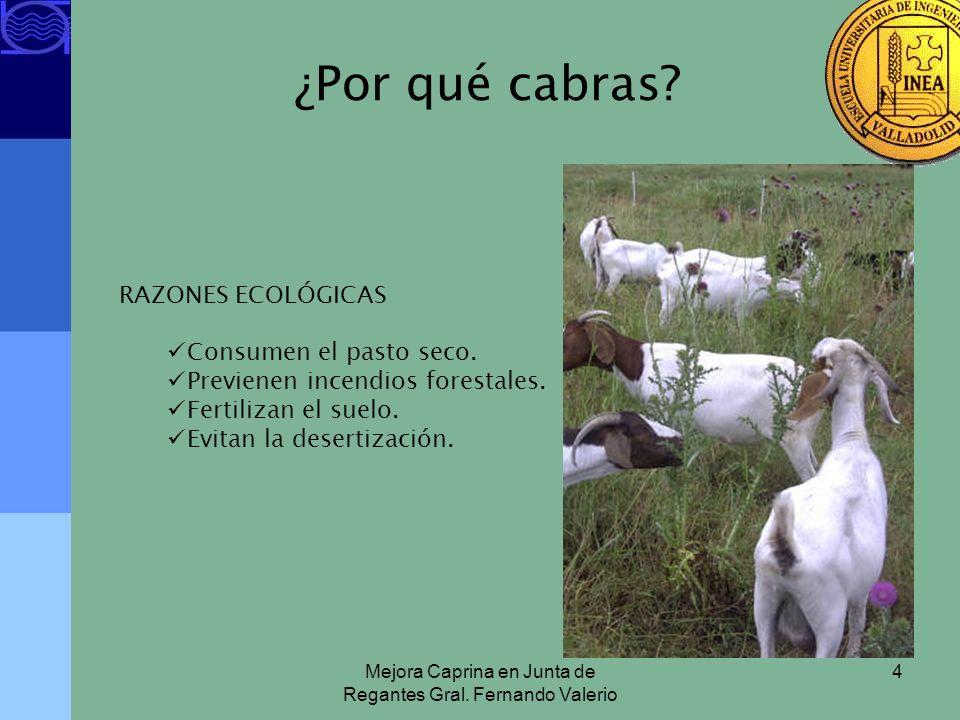 Mejora Caprina en Junta de Regantes Gral. Fernando Valerio 4 ¿Por qué cabras? RAZONES ECOLÓGICAS Consumen el pasto seco. Previenen incendios forestale