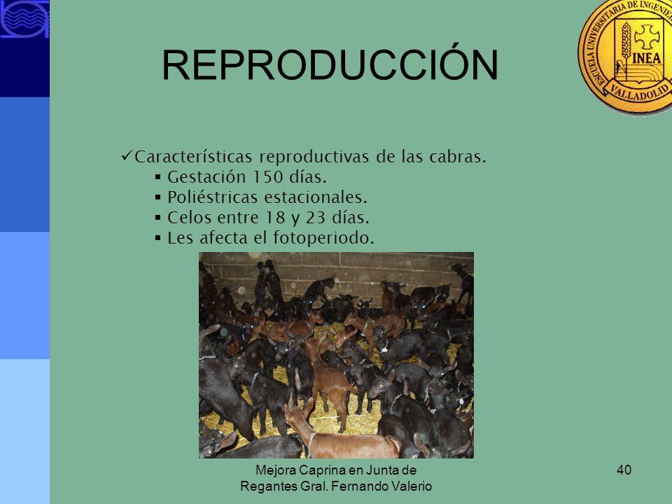 Mejora Caprina en Junta de Regantes Gral. Fernando Valerio 40 REPRODUCCIÓN Características reproductivas de las cabras. Gestación 150 días. Poliéstric