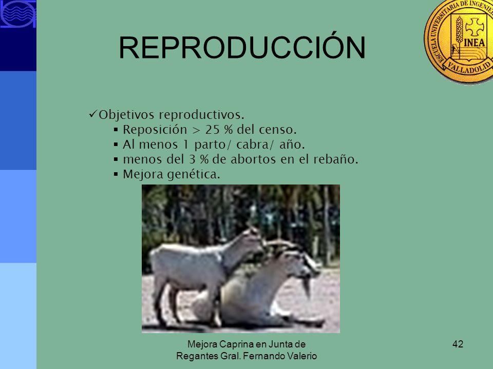 Mejora Caprina en Junta de Regantes Gral. Fernando Valerio 42 REPRODUCCIÓN Objetivos reproductivos. Reposición > 25 % del censo. Al menos 1 parto/ cab