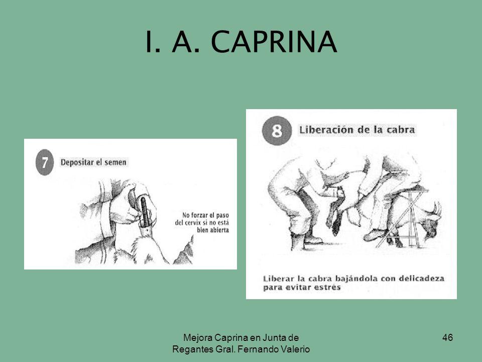 Mejora Caprina en Junta de Regantes Gral. Fernando Valerio 46 I. A. CAPRINA