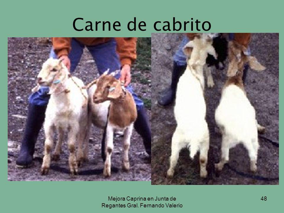 Mejora Caprina en Junta de Regantes Gral. Fernando Valerio 48 Carne de cabrito