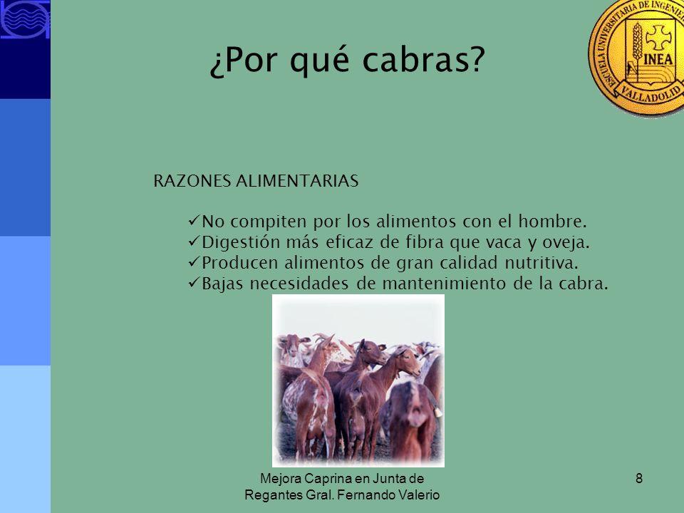 Mejora Caprina en Junta de Regantes Gral. Fernando Valerio 8 ¿Por qué cabras? RAZONES ALIMENTARIAS No compiten por los alimentos con el hombre. Digest