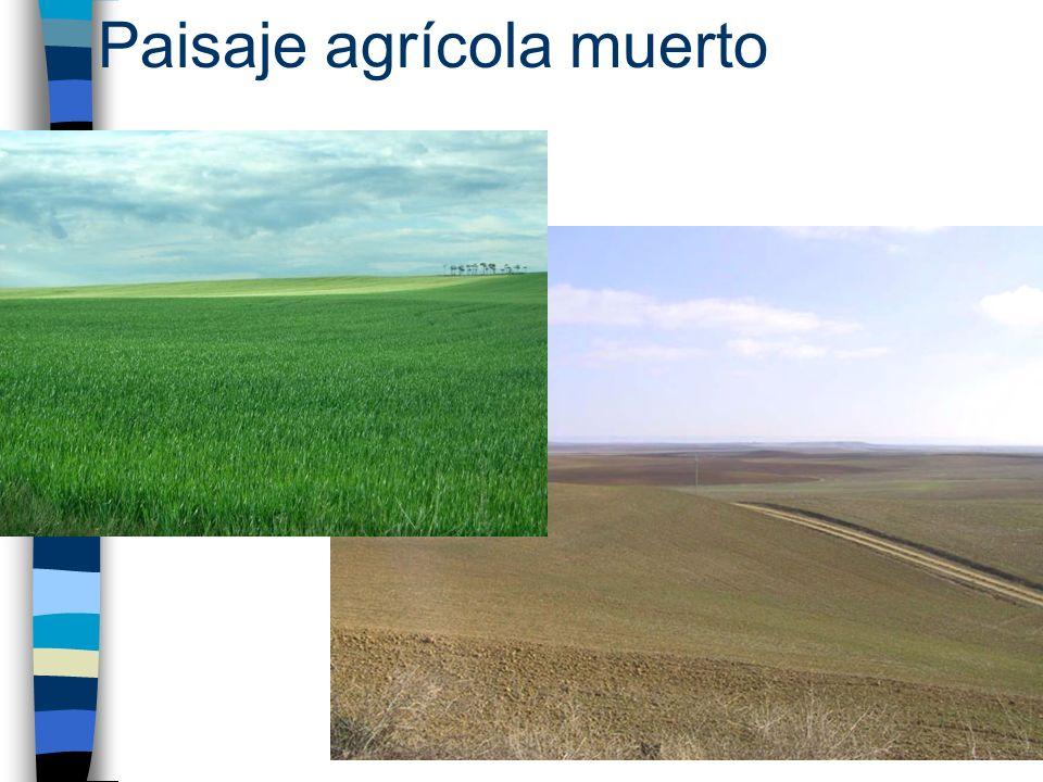 Paisaje agrícola muerto