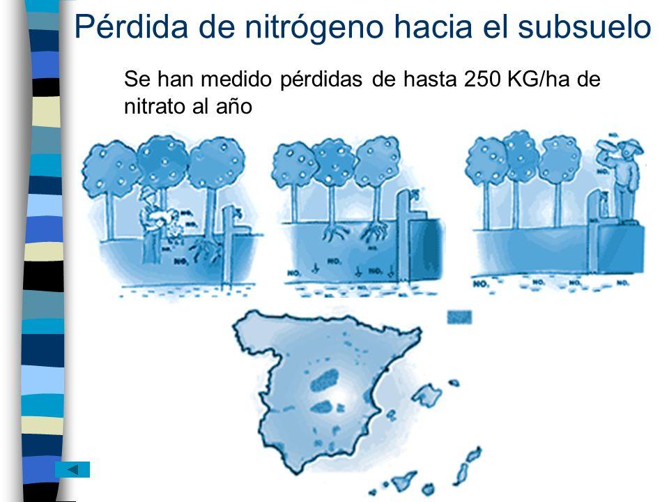 Pérdida de nitrógeno hacia el subsuelo Se han medido pérdidas de hasta 250 KG/ha de nitrato al año