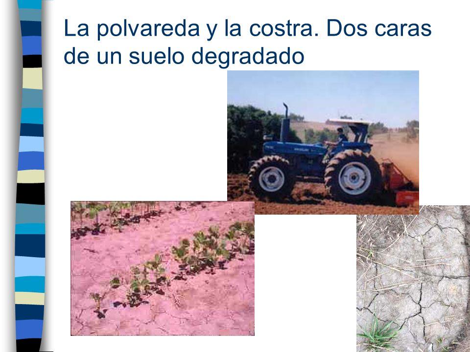 Reglamento de la CEE 2092/91 Líneas generales Se define lo que es la Agricultura Ecológica y se dan normas precisas sobre: Producción vegetal –Fertilización –Productos fitosanitarios Producción animal –Condiciones de vida –Alimentación –Sanidad –Transporte Elaboración industrial de productos agroalimentarios Etiquetado