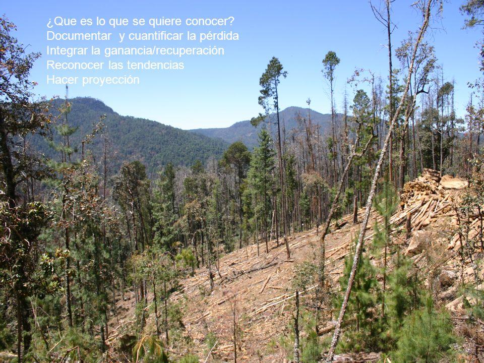 Superficie perdida de los distintos tipos de vegetación durante el período comprendido entre 1993 y 2002, y su estado de conservación.
