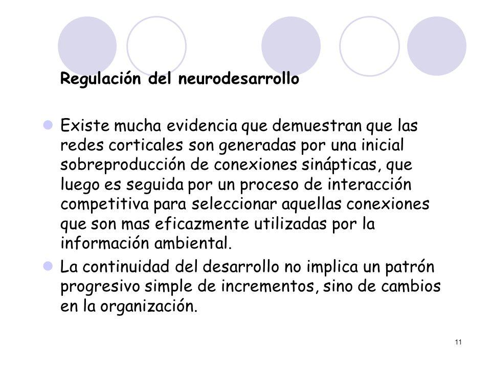 11 Regulación del neurodesarrollo Existe mucha evidencia que demuestran que las redes corticales son generadas por una inicial sobreproducción de cone