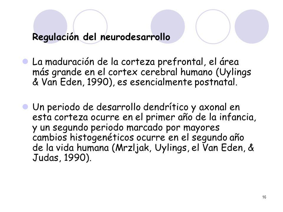 16 Regulación del neurodesarrollo La maduración de la corteza prefrontal, el área más grande en el cortex cerebral humano (Uylings & Van Eden, 1990),