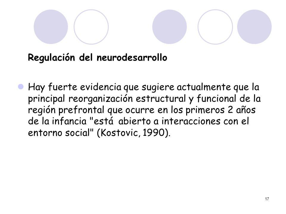 17 Regulación del neurodesarrollo Hay fuerte evidencia que sugiere actualmente que la principal reorganización estructural y funcional de la región pr