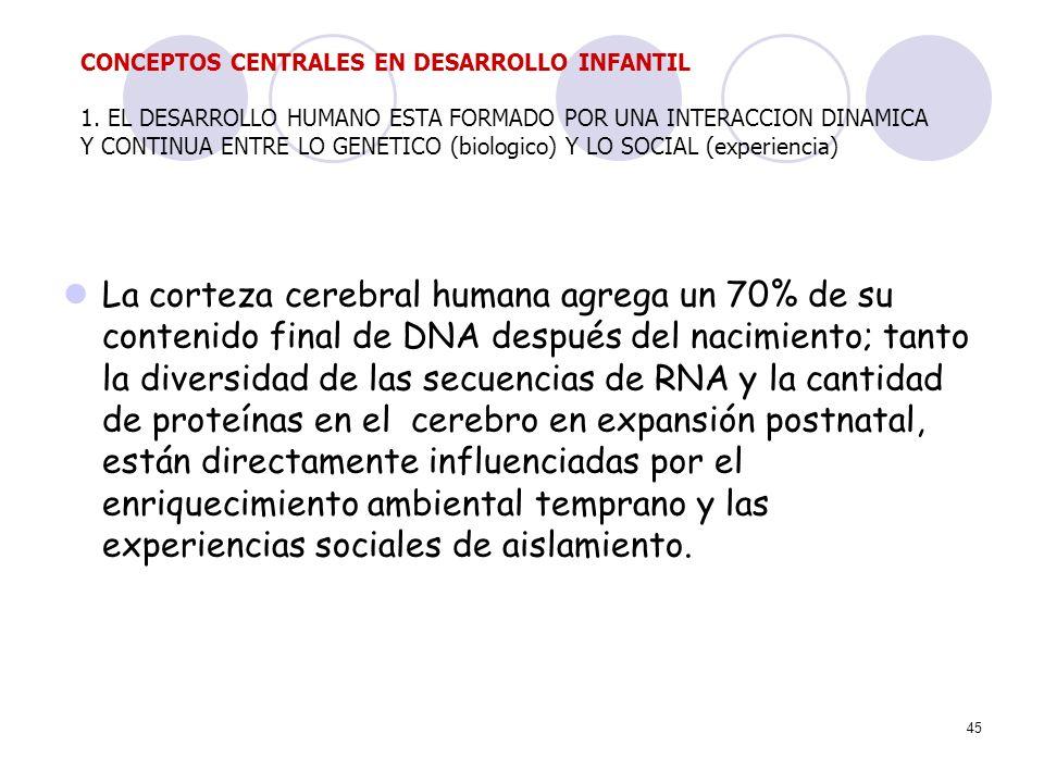 45 La corteza cerebral humana agrega un 70% de su contenido final de DNA después del nacimiento; tanto la diversidad de las secuencias de RNA y la can