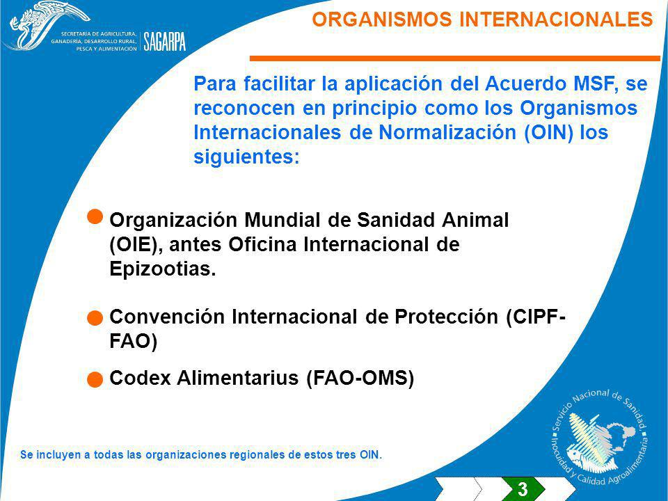 ORGANISMOS INTERNACIONALES Para facilitar la aplicación del Acuerdo MSF, se reconocen en principio como los Organismos Internacionales de Normalización (OIN) los siguientes: Convención Internacional de Protección (CIPF- FAO) Organización Mundial de Sanidad Animal (OIE), antes Oficina Internacional de Epizootias.