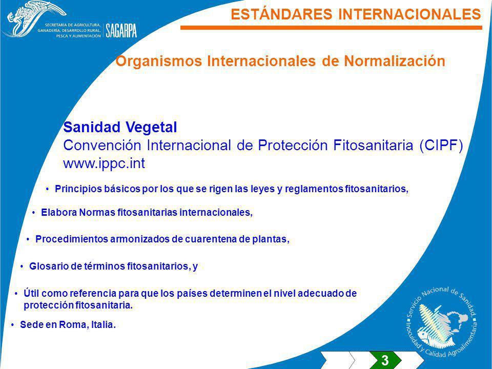 Sanidad Vegetal Convención Internacional de Protección Fitosanitaria (CIPF) www.ippc.int ESTÁNDARES INTERNACIONALES Organismos Internacionales de Norm