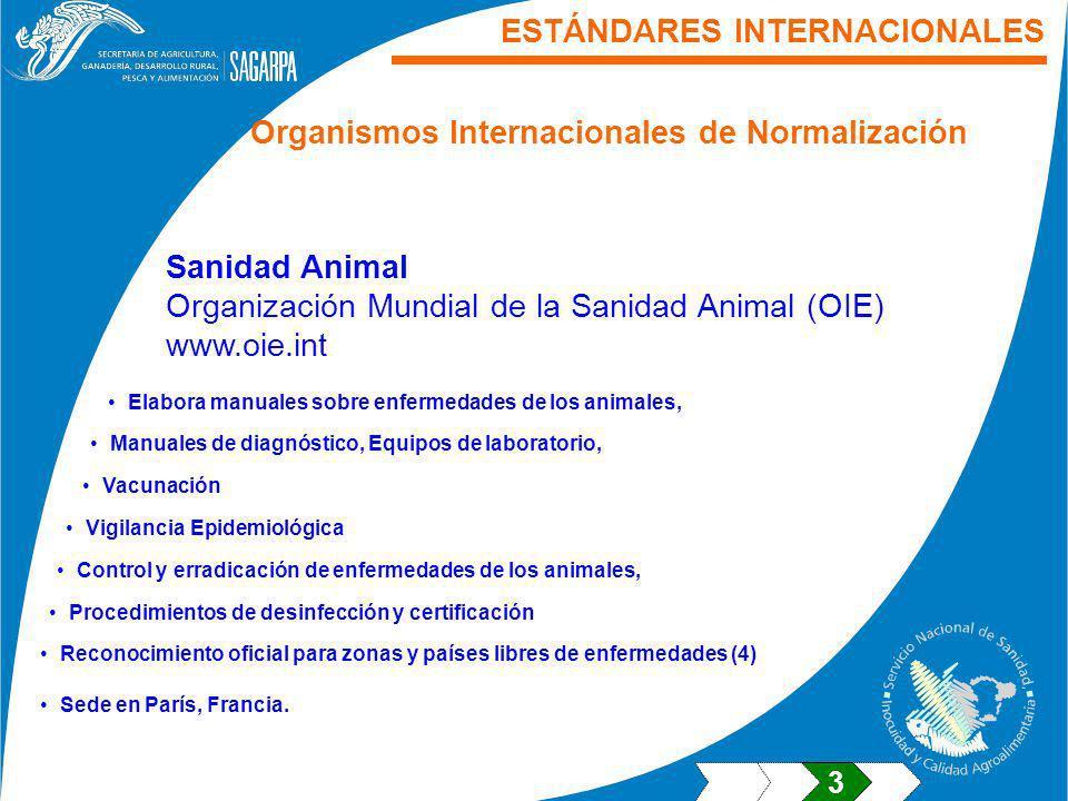 ESTÁNDARES INTERNACIONALES Sanidad Animal Organización Mundial de la Sanidad Animal (OIE) www.oie.int Elabora manuales sobre enfermedades de los anima