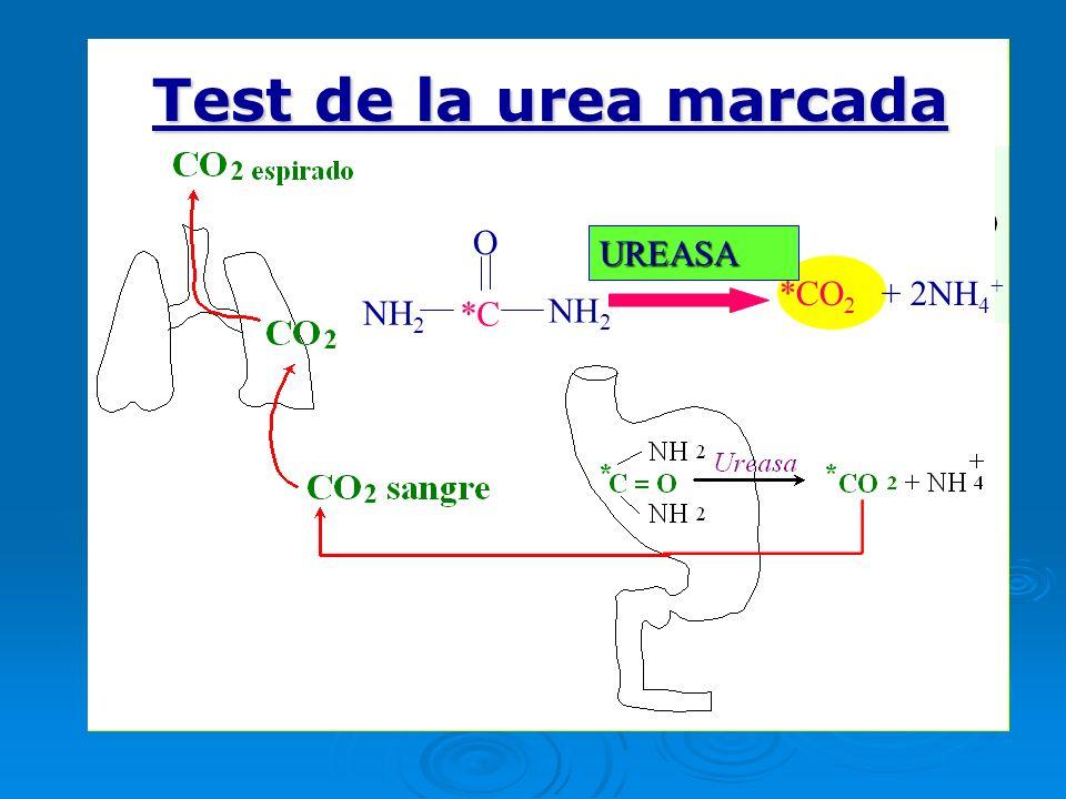 1.PROCEDIMIENTO PARA LA REALIZACIÓN DEL TEST Sobre de ácido cítrico Comprimido de urea (*C) Tubos de recogida de muestra 2 tapones verde (basal) 2 tapones blanco (post)