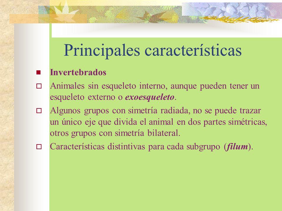 Principales características Invertebrados Animales sin esqueleto interno, aunque pueden tener un esqueleto externo o exoesqueleto. Algunos grupos con