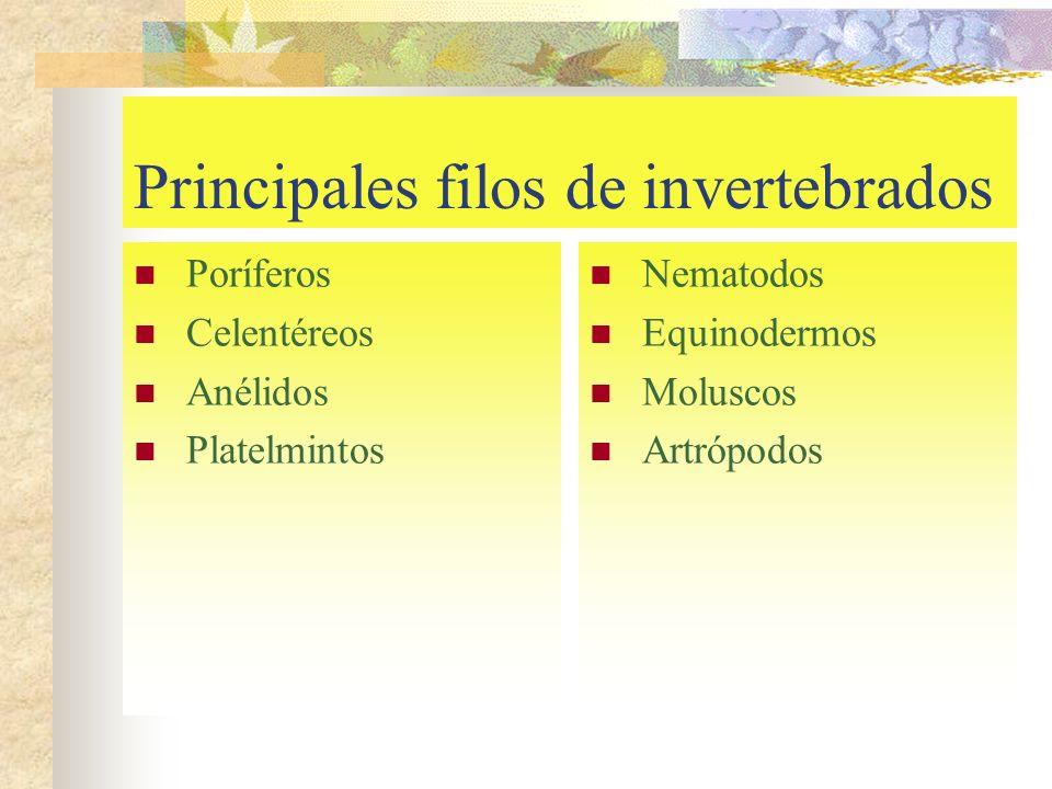 Principales filos de invertebrados Poríferos Celentéreos Anélidos Platelmintos Nematodos Equinodermos Moluscos Artrópodos