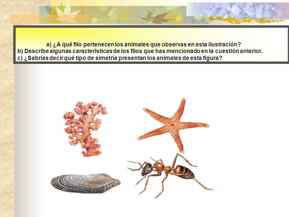 a) ¿A qué filo pertenecen los animales que observas en esta ilustración? b) Describe algunas características de los filos que has mencionado en la cue
