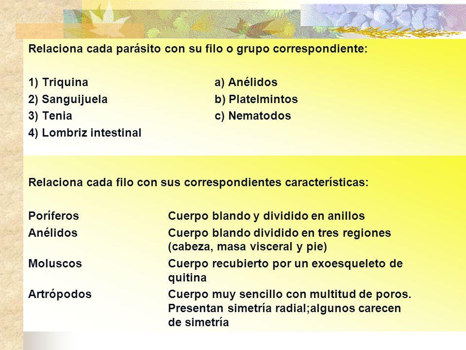 Relaciona cada parásito con su filo o grupo correspondiente: 1) Triquinaa) Anélidos 2) Sanguijuelab) Platelmintos 3) Teniac) Nematodos 4) Lombriz inte