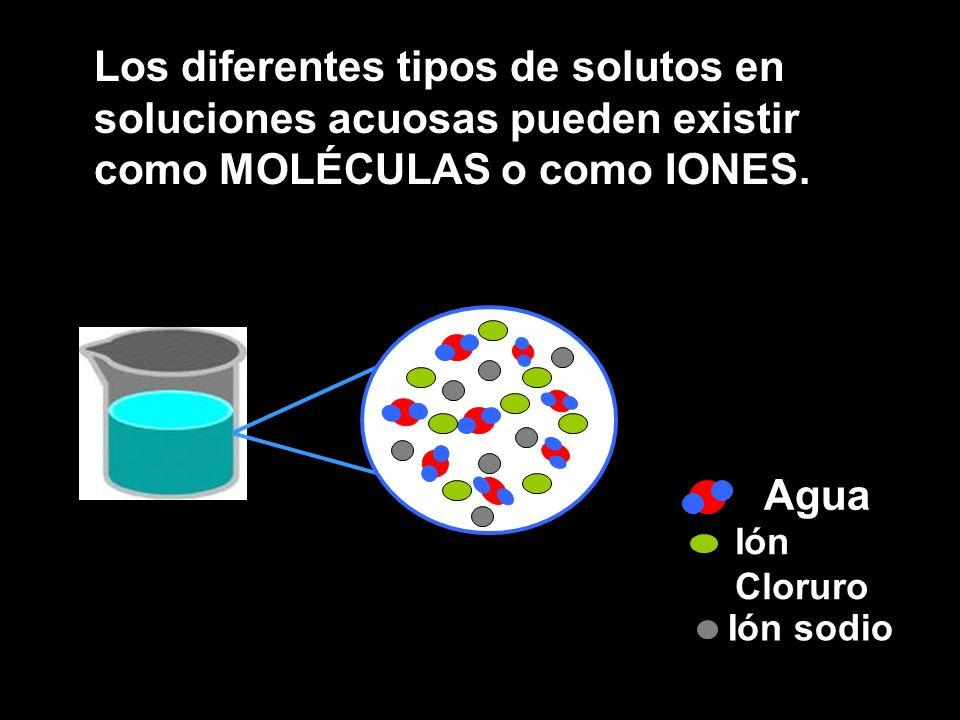 Los diferentes tipos de solutos en soluciones acuosas pueden existir como MOLÉCULAS o como IONES.
