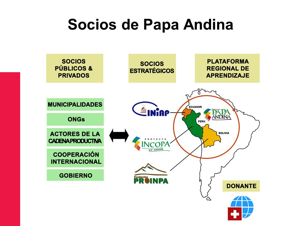 Socios de Papa Andina