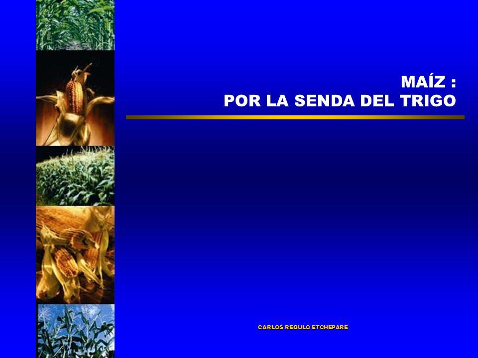 CARLOS REGULO ETCHEPARE MAÍZ : POR LA SENDA DEL TRIGO