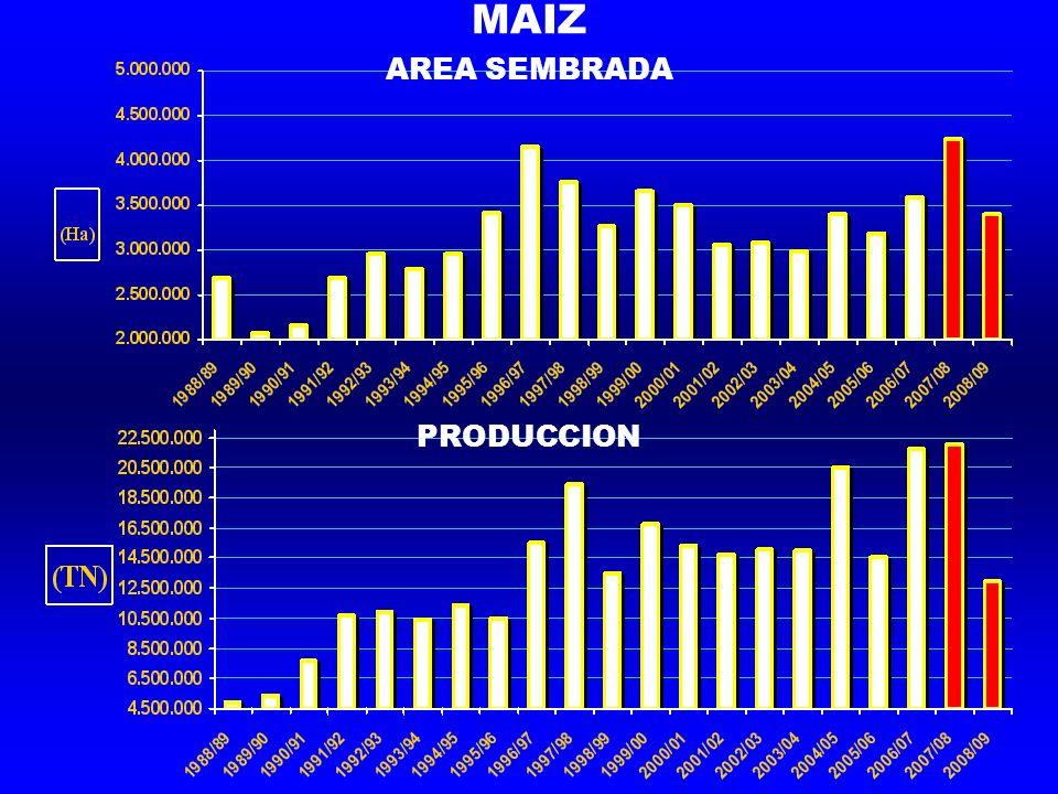 MAIZ AREA SEMBRADA PRODUCCION