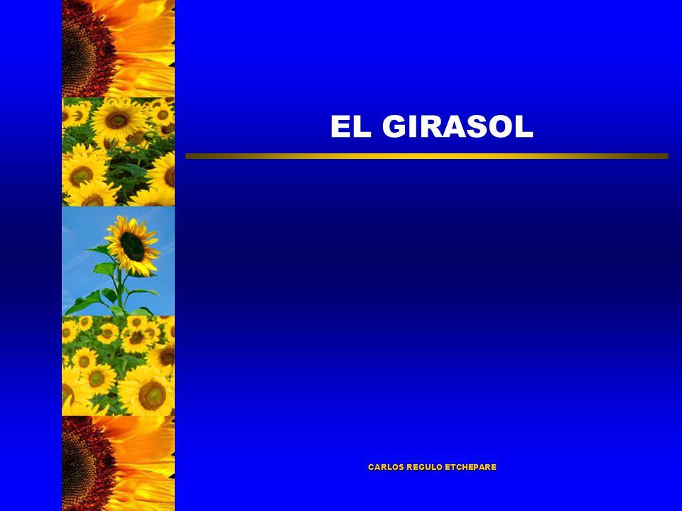 EL GIRASOL CARLOS REGULO ETCHEPARE