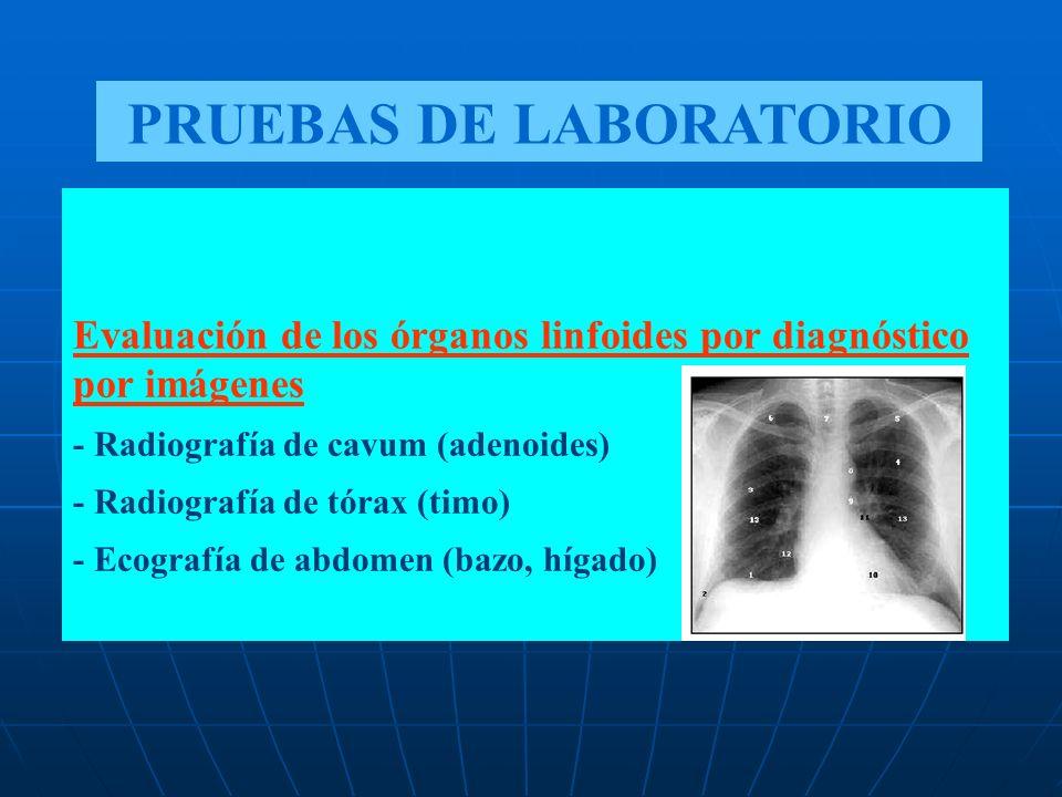 Evaluación de los órganos linfoides por diagnóstico por imágenes - Radiografía de cavum (adenoides) - Radiografía de tórax (timo) - Ecografía de abdom