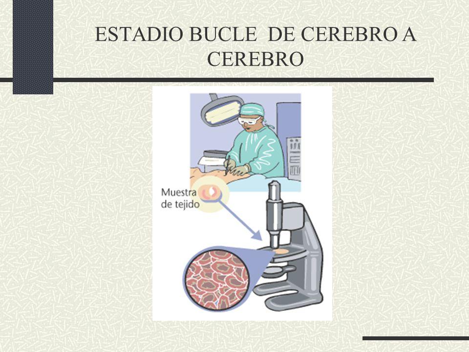 Termino introducido por Lunberg se usa para representar la relacion entre los clinicos y el laboratorio.