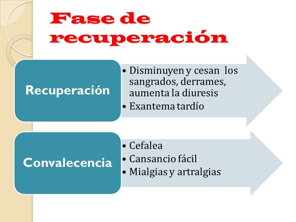 Fase de recuperación Disminuyen y cesan los sangrados, derrames, aumenta la diuresis Exantema tardío Recuperación Cefalea Cansancio fácil Mialgias y a
