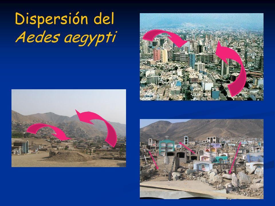 19 Dispersión del Aedes aegypti