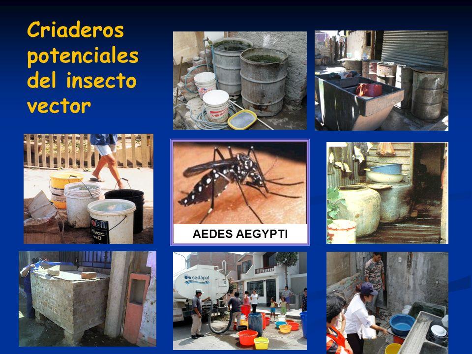 AEDES AEGYPTI Criaderos potenciales del insecto vector