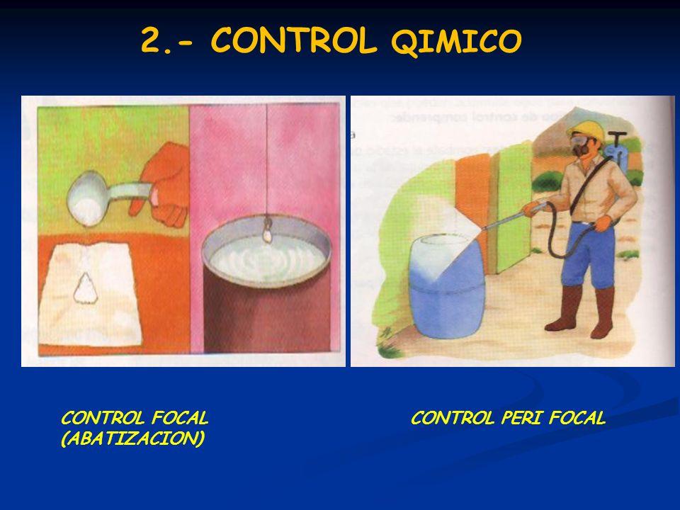 2.- CONTROL QIMICO CONTROL FOCAL (ABATIZACION) CONTROL PERI FOCAL