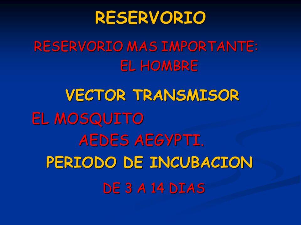 El mosquito Aedes aegypti es el vector del Dengue y la Fiebre Amarilla.