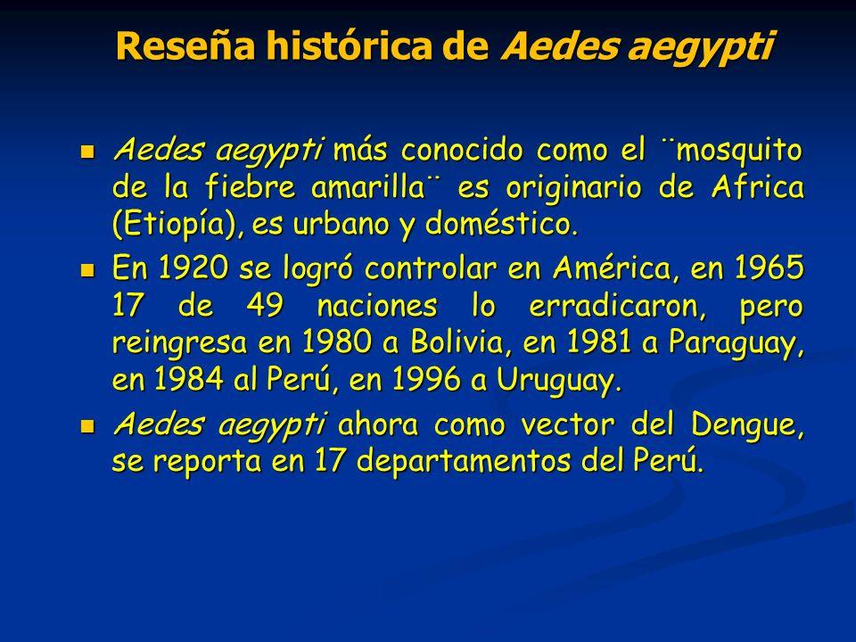 Reseña histórica de Aedes aegypti Reseña histórica de Aedes aegypti Aedes aegypti más conocido como el ¨mosquito de la fiebre amarilla¨ es originario