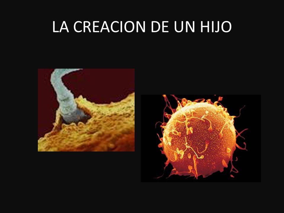 LA CREACION DE UN HIJO
