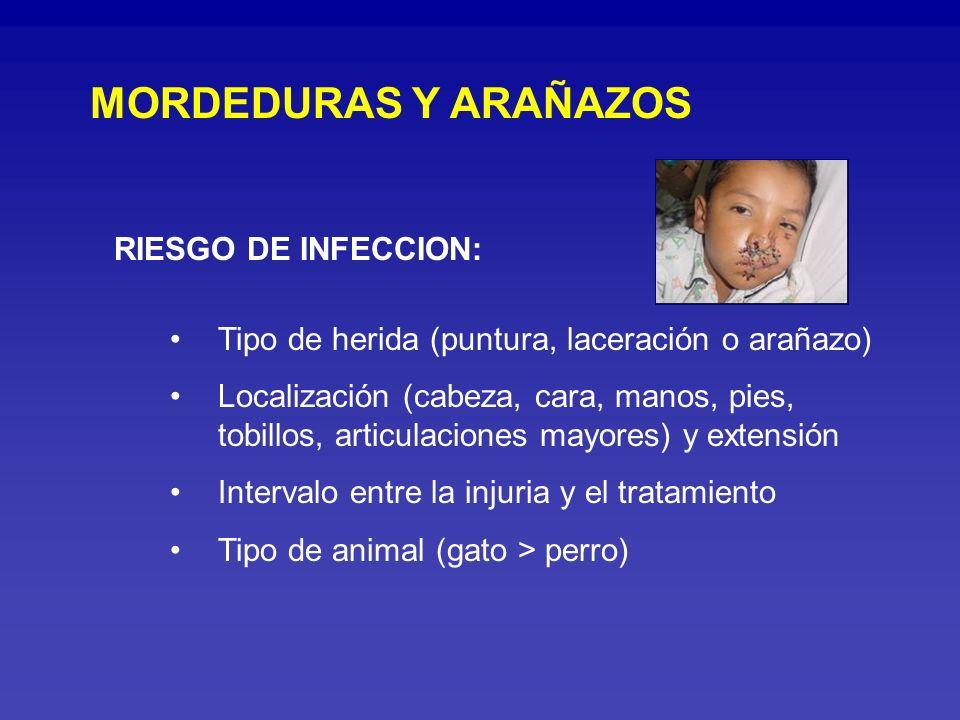 MICROORGANISMOS: Pasteurella multocida (infección precoz) Staphylococcus sp Streptococcus sp Corynebacterium sp Capnacytophaga canimorsus (inmunocomprometidos) Anaerobios (41%) Generalmente polimicrobianas
