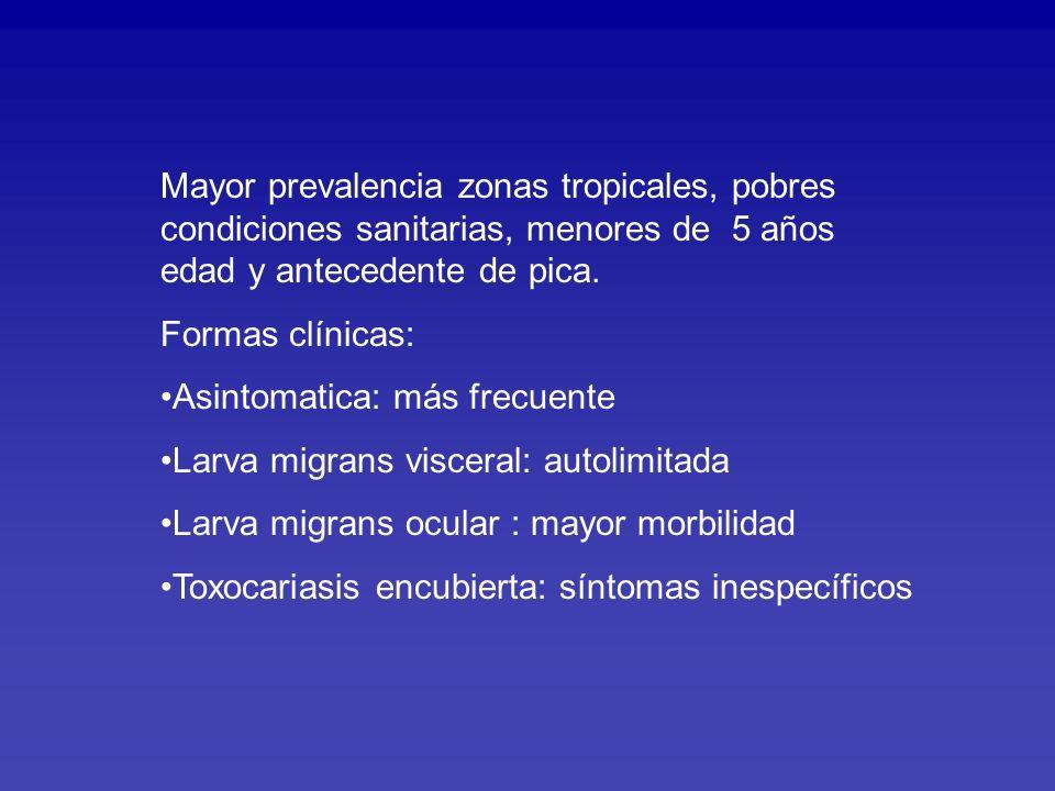 EPIDEMIOLOGIA en Latinoamerica Chile 1999: 84 plazas y 12 parques de 32 ciudades Se encontró huevos de Toxocara en 13.5% de muestras fecales.