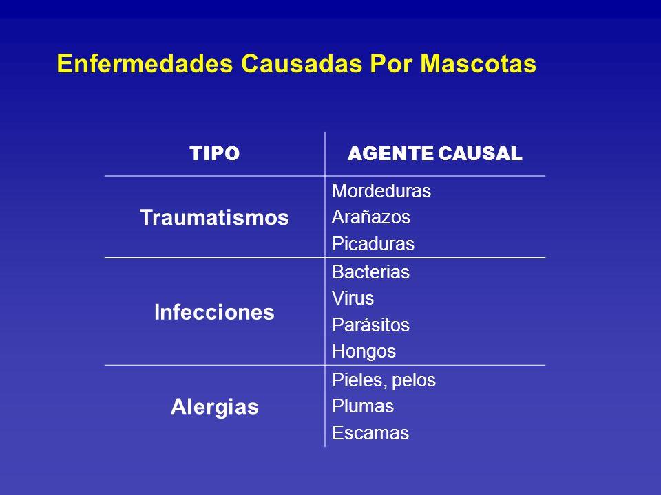 El 60% de los hogares en Lima tienen mascotas El 24% de los hogares tienen más de una mascota Solo el 55% de los niños que tienen mascotas han recibido información sobre riesgo de enfermedades Fuente de información: Padres 60% Otros familiares12% Médicos12% TV 9% Veterinarios 6% Infecciones Asociadas a Mascotas Candela J.